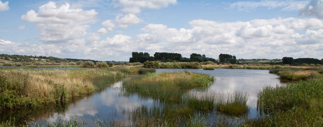 Panoramic photo of marshland with water against a blue sky - potential site for natural capital biodiversity net gain