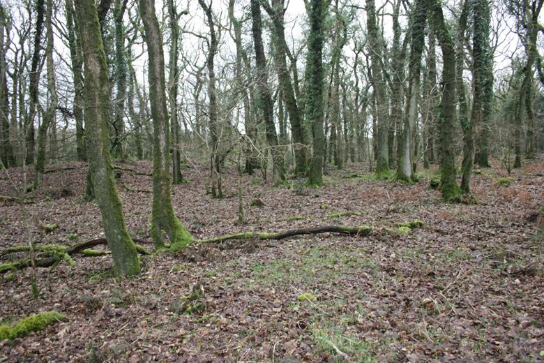 7.5 acres Land, Burley Wood, Bridestowe EX20 - Available