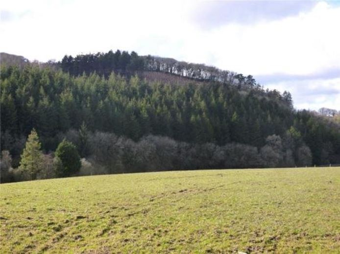 19.1 acres Land, Burley Wood, Bridestowe EX20 - Available